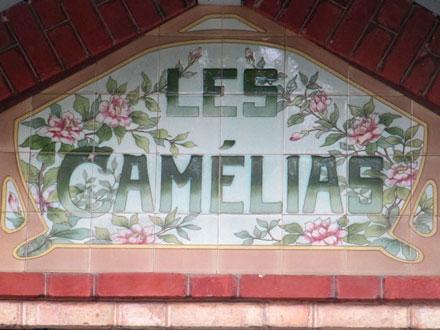 LES CAMELIAS à Versailles (78)