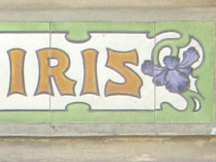 LES IRIS à Mers-les-Bains (80)