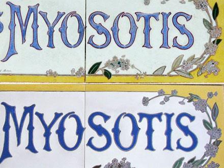 LES MYOSOTIS à Soulac-sur-Mer (33) G.P. Dagrant Bordeaux et EC 2013