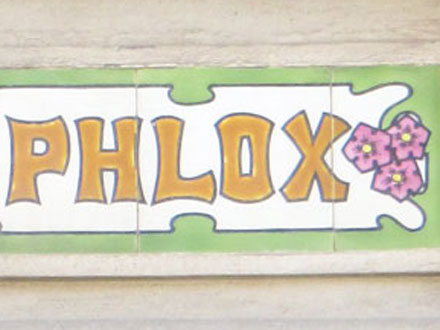 LES PHLOX à Mers-les-Bains (80)
