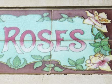 LES ROSES à Versailles (78)