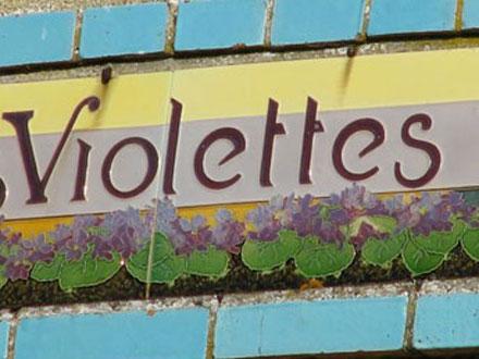 Les Violettes à Saint-Mard-sur-le-Mont (51)